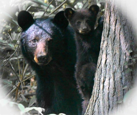 bear_renamed_12168